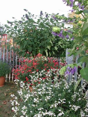 Stand Fleurs et Senteurs à Saint Jean de Beauregard